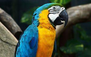 parrot-1218241__340